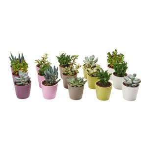 succulent-plante-avec-vase__0324676_pe516940_s4